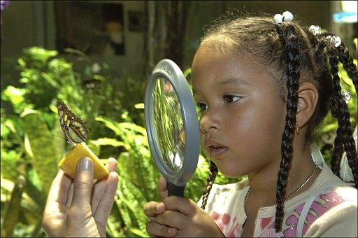 Una niña observa una de las mariposas de la muestra. (Foto: EFE)