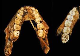 Los primeros homínidos varones maduraban después que las hembras