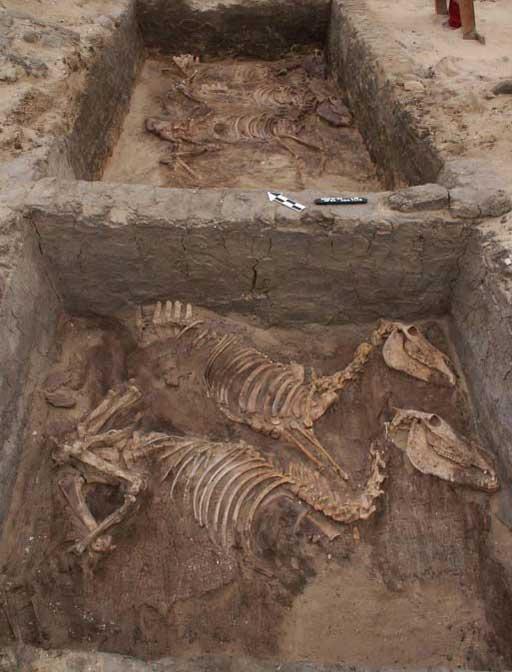 Fósiles encontrados en una tumba en el yacimiento de Abydos. (Foto: PNAS)