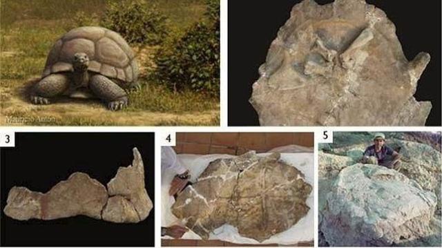 tortugas-gran-via--644x362