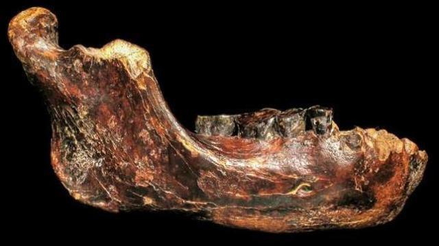 fosil-hominido-penghu1--644x362