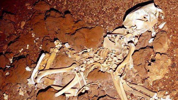Descubren-restos-marsupial-gigante-Australia_TINIMA20110704_0035_5