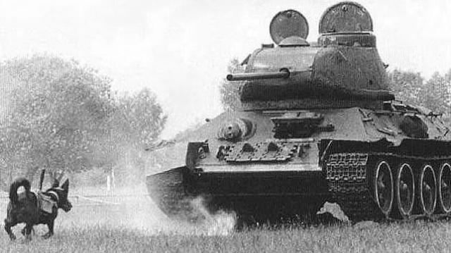 YOUTUBE Un perro-mina se dirige hacia un carro de combate durante un entrenamiento