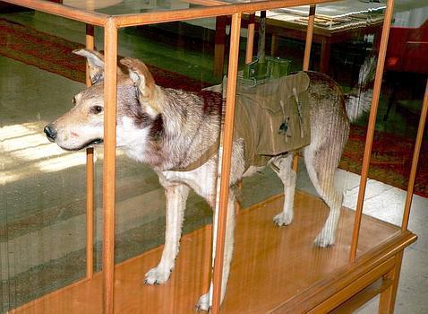 Recreación de un perro-bomba soviético M.S.G.