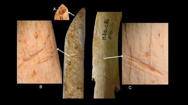 M.D. GARRALDA ET AL Los neandertales realizaron cortes con herramientas de sílex en este radio