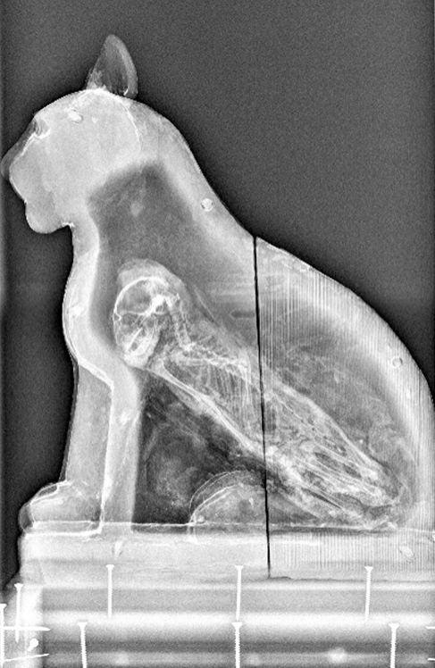 La momia de un gato vista a través de una radiografía. BBC/ University of Manchester