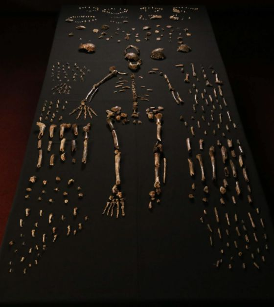 Los fósiles analizados en el estudio / eLIFE