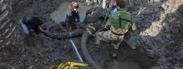 Restos de un mamut hallado en Michigan Daryl Marshke
