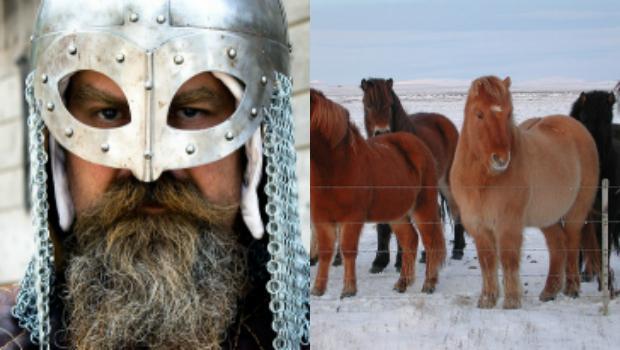 La historia de los genes de los caballos ha llevado a los investigadores hasta el siglo IX. A la derecha, caballos islandeses, capaces de hacer el «tölt» - Hans Splinter/Sela Yair/FLICKR