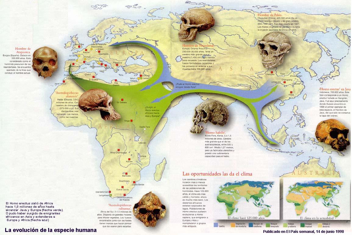 hominidos | www.elhistoriador.es